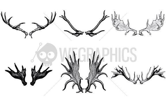 Deer's antler illustrations