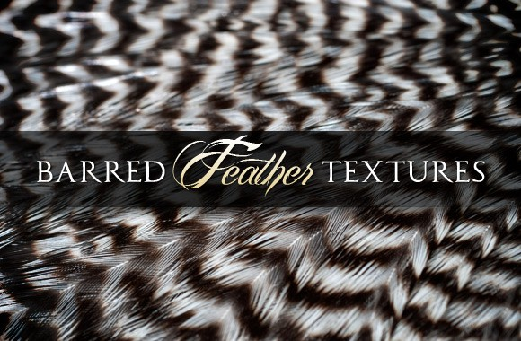 Barred Feather Textures