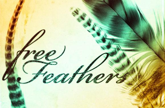 Free Feathers Photoshop Brush Set