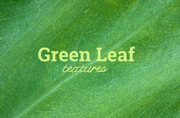 Green Leaf Texture Set