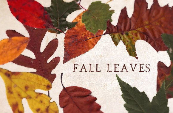 Fall Leaves Texture Pack