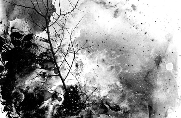 Perennial Splatters – Photoshop Brush Set