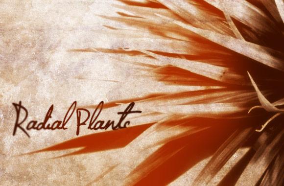 Radial Plants Brush Set