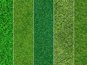 Seamless Grass Textures 2