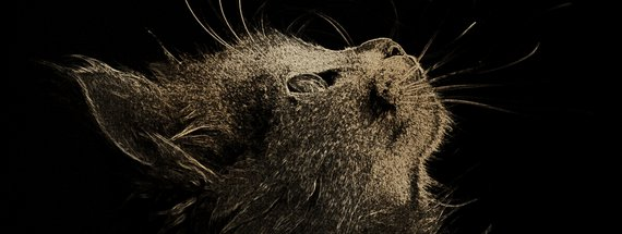 How to Create a Foil Engraving Art Effect in Photoshop