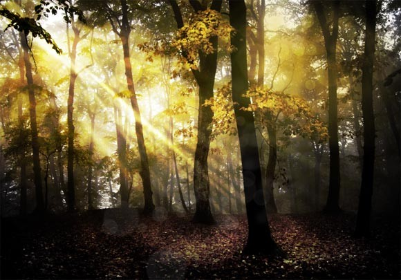 Using HDR Toning in Photoshop to Create a Fantasy Forest Scene