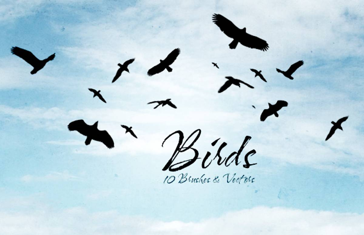 Bird  Silhouettes  Preview11