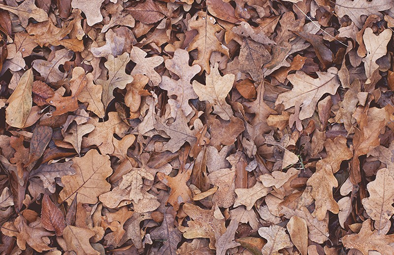 Dry Leaves Texture Pack