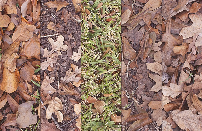 Dry Leaves Texture Pack 2