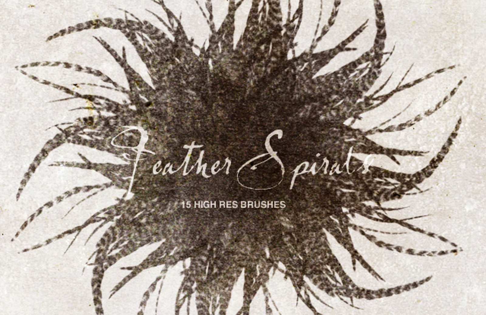 Feather  Spirals  Preview 1 1