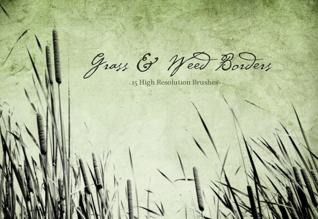 Grass & Weed Borders