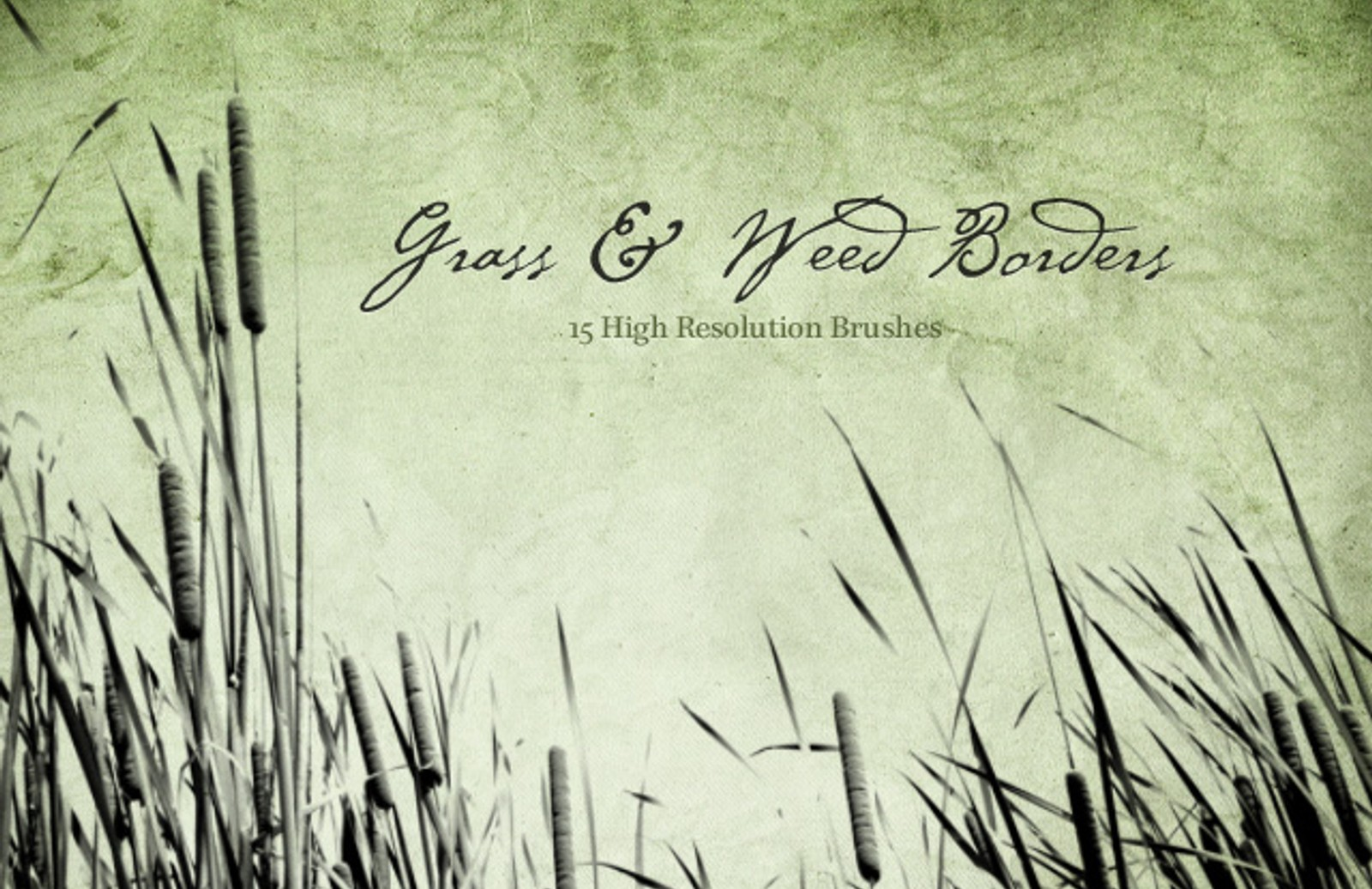 Grass  Weed  Borders  Preview1