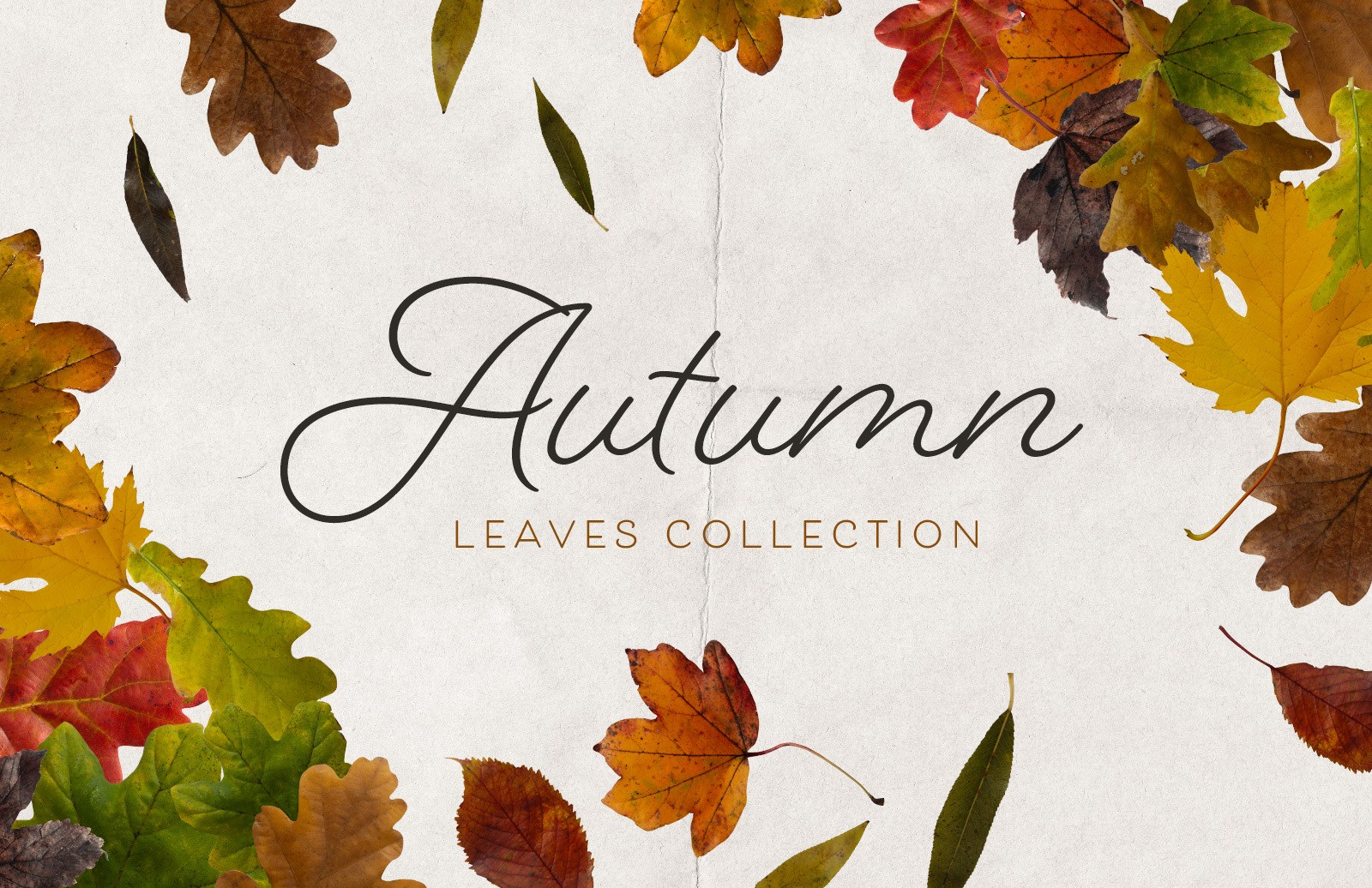 Isolated Autumn Leaves Collection Preview 1
