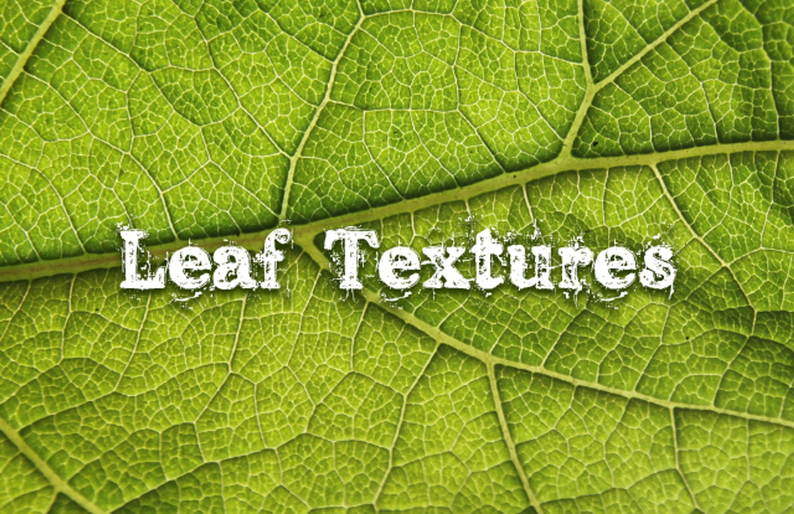 Leaf  Textures  Preview1