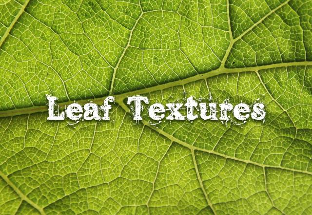 Leaf Textures
