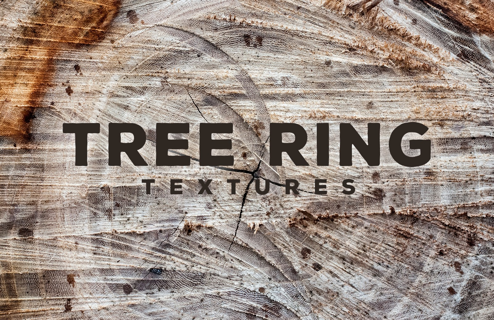 Tree  Ring  Textures  Preview 1