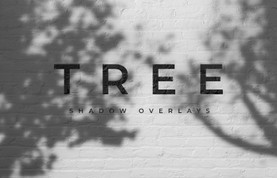 Outdoors Tree Shadow Overlays