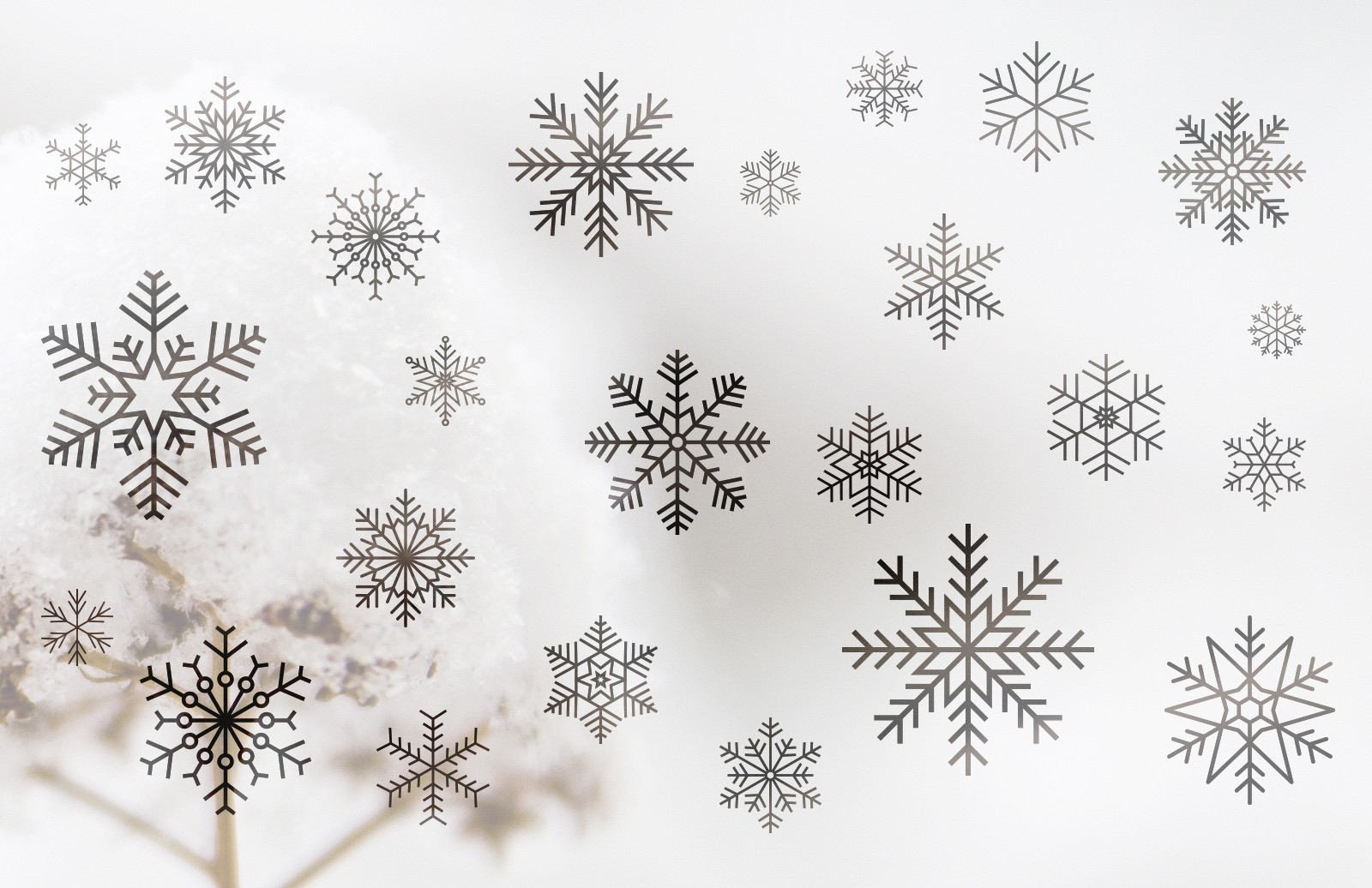 Vector  Snowflakes  Preview 1