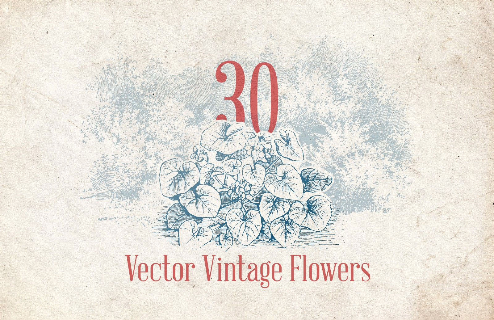 Vector Vintage Flower Illustrations