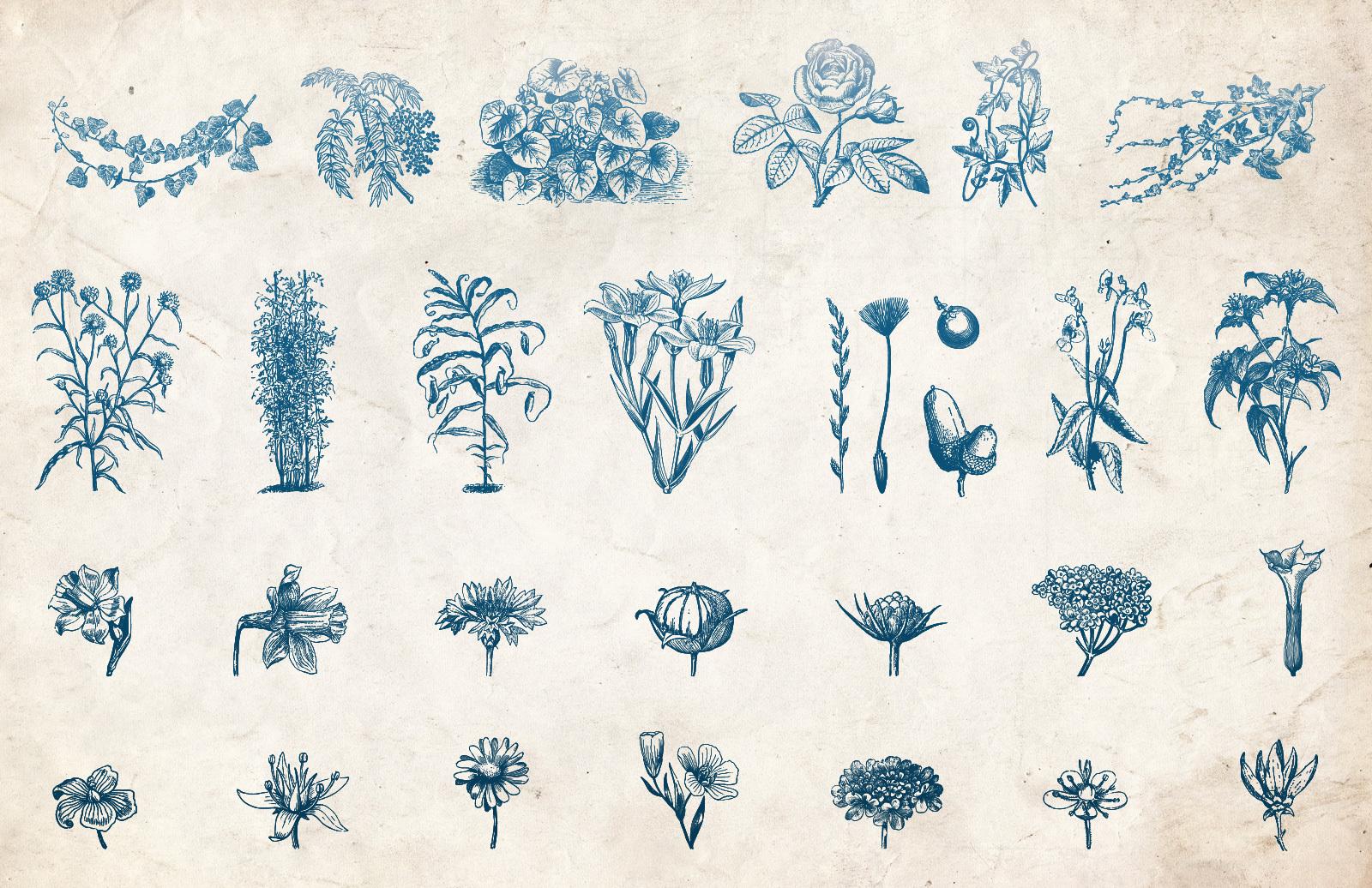 Vector Vintage Flower Illustrations
