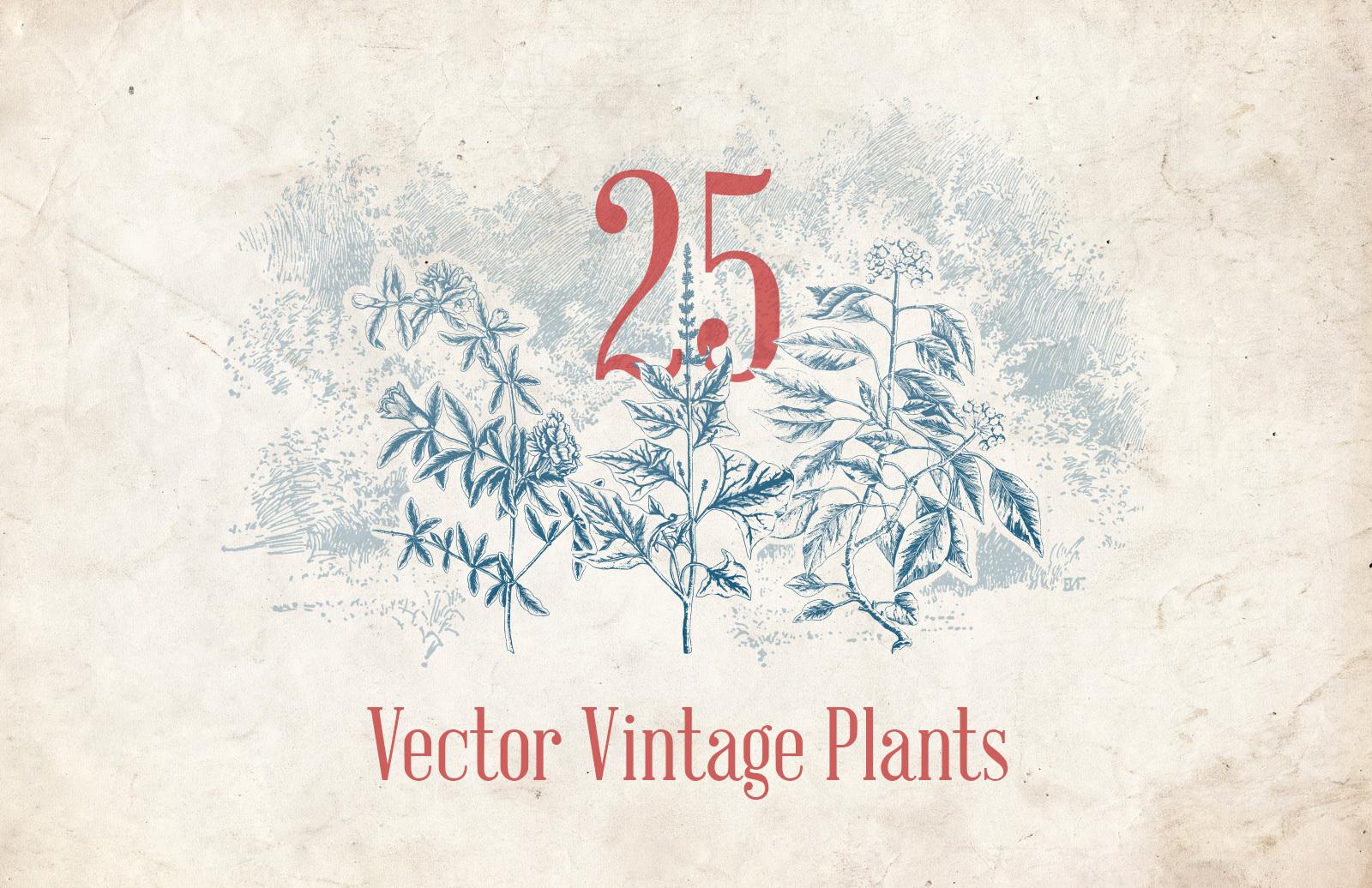 Vector Vintage Plants Preview 1