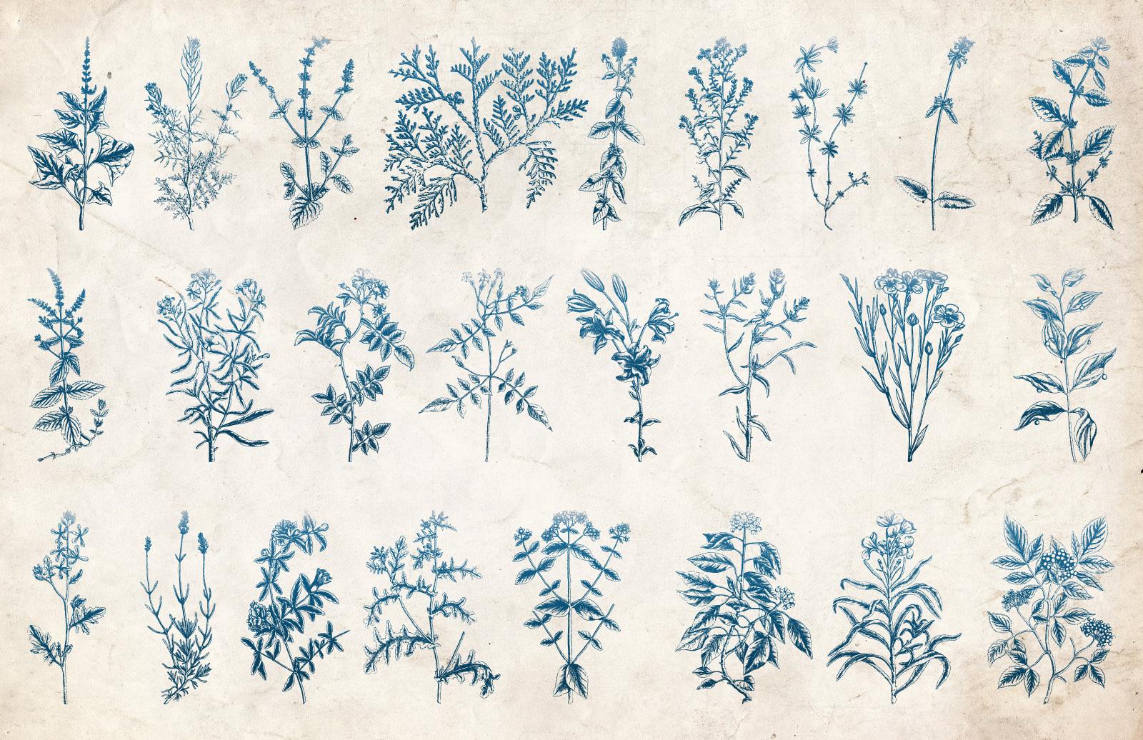 Vector Vintage Plants