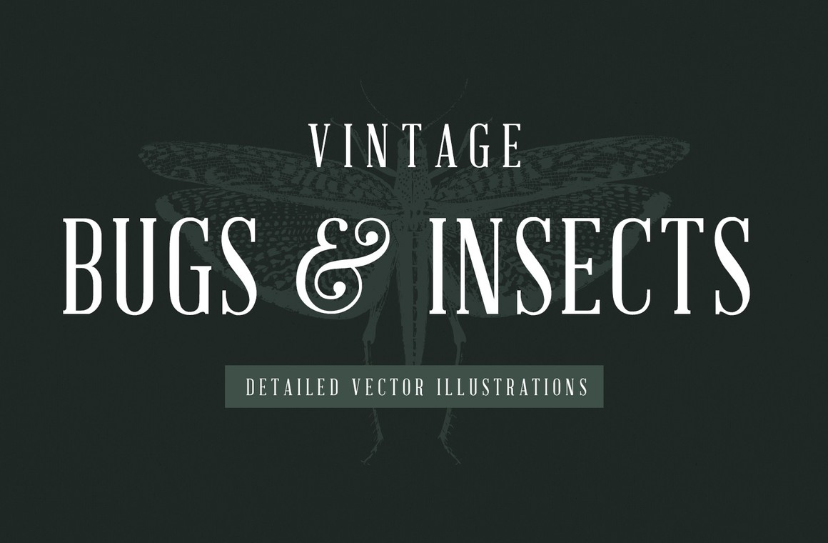 Vintage Insect Vector Illustrations