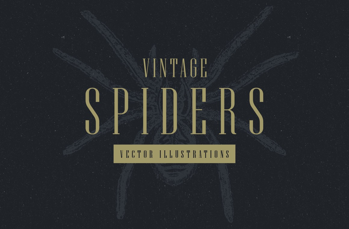 Vintage Spiders Vector Illustrations
