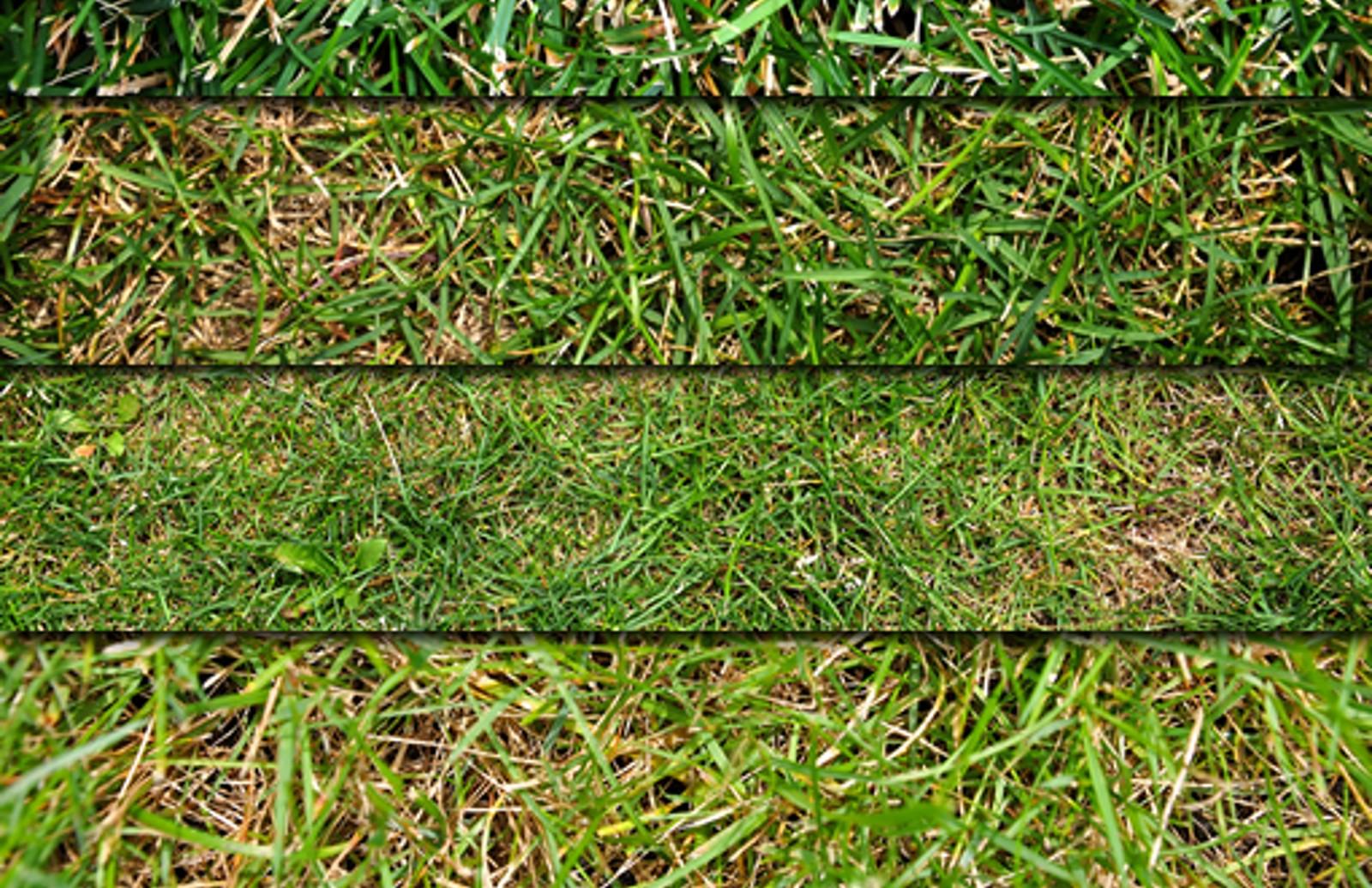 Grass Textures Preview