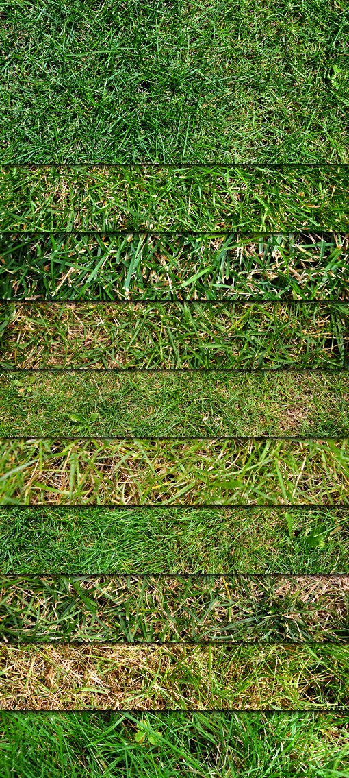 Eco-Friendly Green Grass Textures