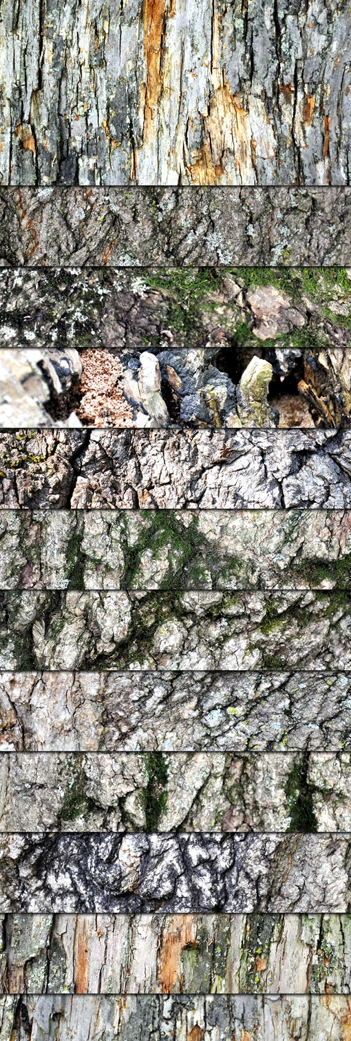 Grungy Wood And Bark Textures